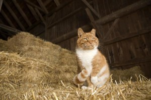 adopt-barncat